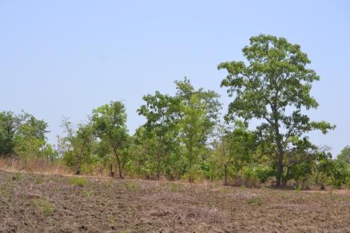 Eco-ferme Lokoli Sinématiali Korhogo Côte d'Ivoire